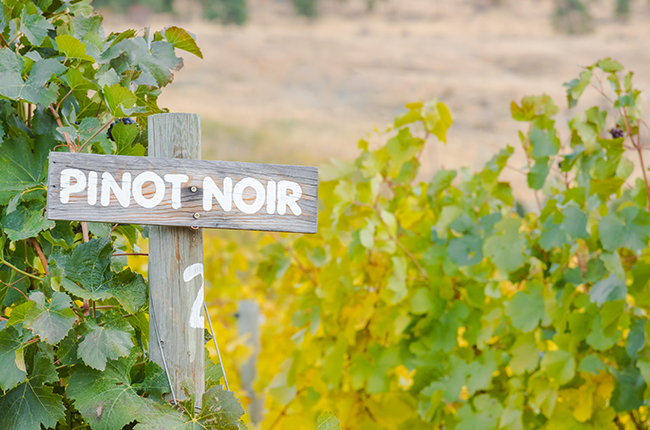 Top Pinot Noir wines outside Burgundy – Updated