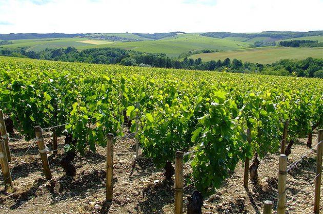 Vineyards in Chablis, Burgundy