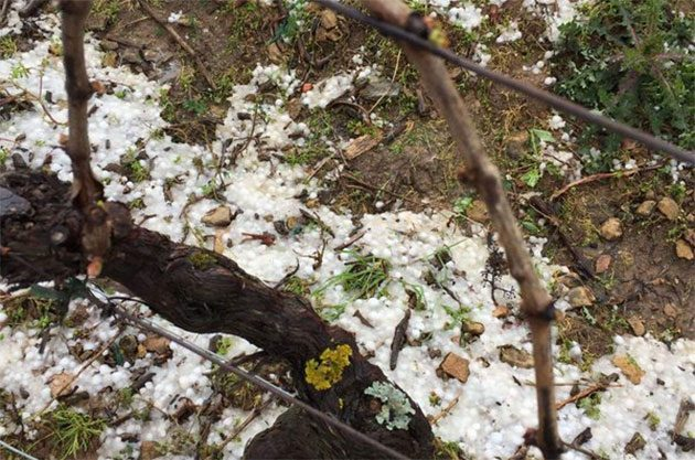 Hail stones in Domaine Gonon vineyards, mâcaonnais