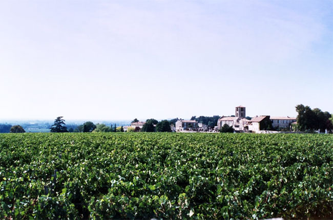 Vineyards in Pomerol