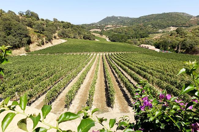 Suddura's Stazzo vineyard, Sardinia.