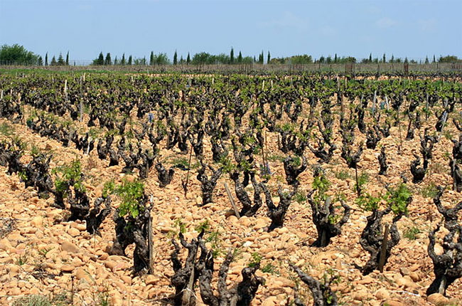 Chateauneuf-du-Pape's best producers