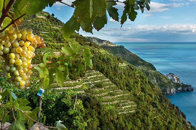 Cinque Terre travel guide - Decanter