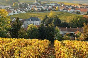 Clos du Mesnil vineyard in Champagne