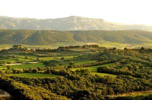 Mas de Daumas Gassac vineyards, Languedoc