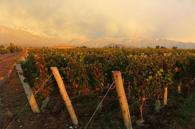 Argentina 2016 wine harvest, Mendoza