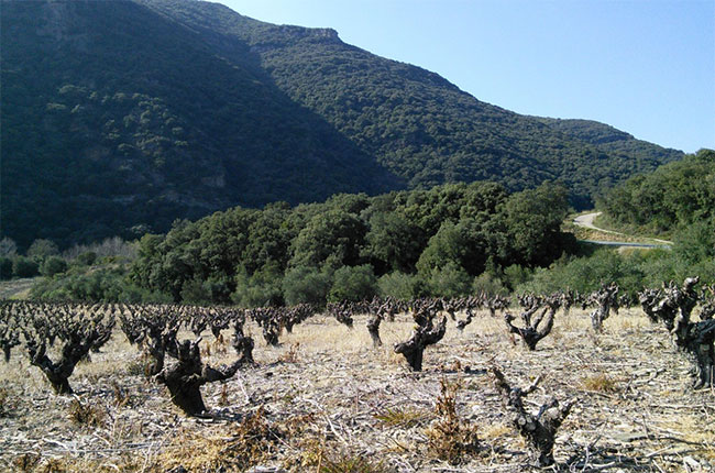 Schist vineyards in Roquebrun, Languedoc, Jefford