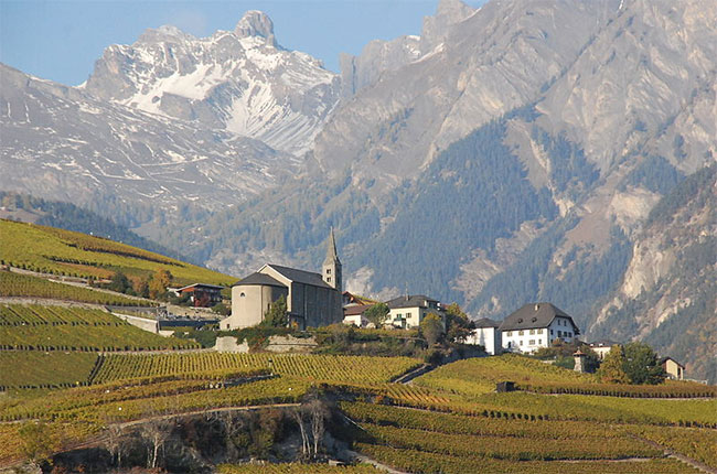 Vineyards in Valais, Switzerland