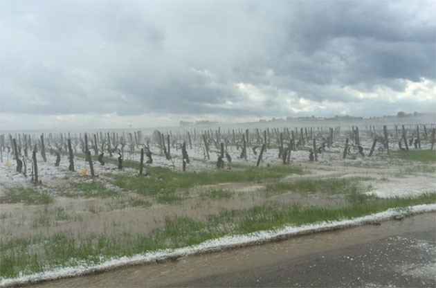 hail in chablis, burgundy