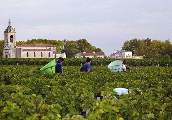 Bordeaux 2015 vintage guide