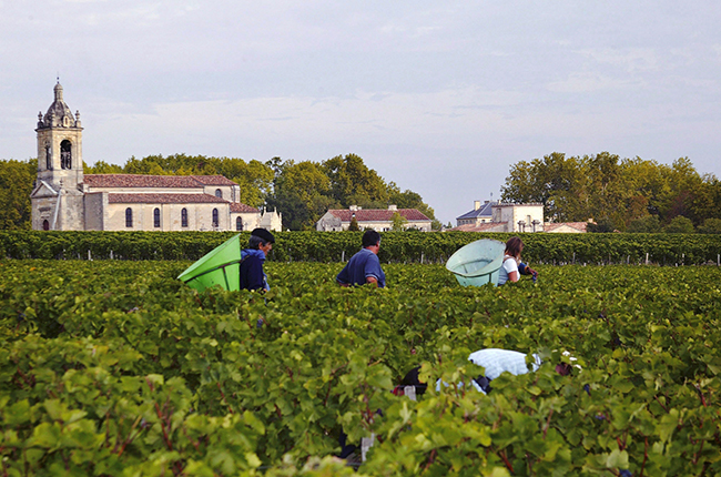 Chateau Margaux harvest pickers