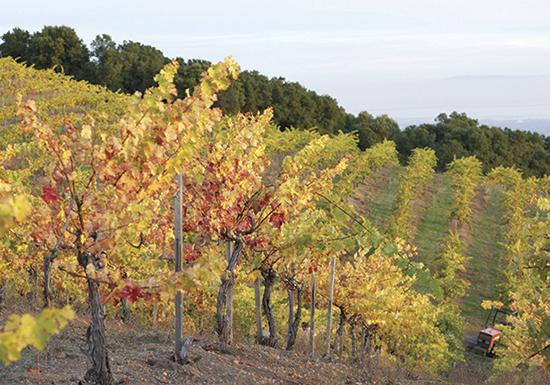 California, Ridge Vineyards Monte Bello