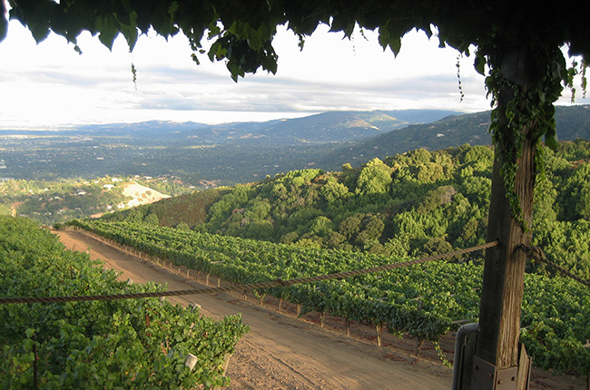 Burgundy style California