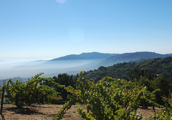 USA, California, Ridge Vineyards Monte Bello