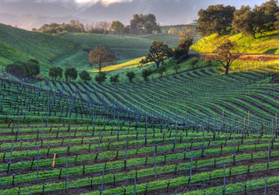 California, Windmill Ranch Vineyard