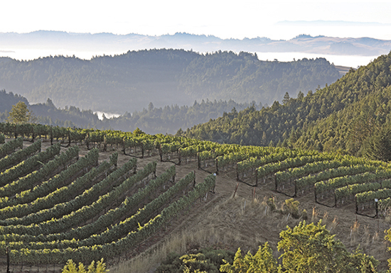 California, Sonoma County Fort Ross Seaview Vineyard