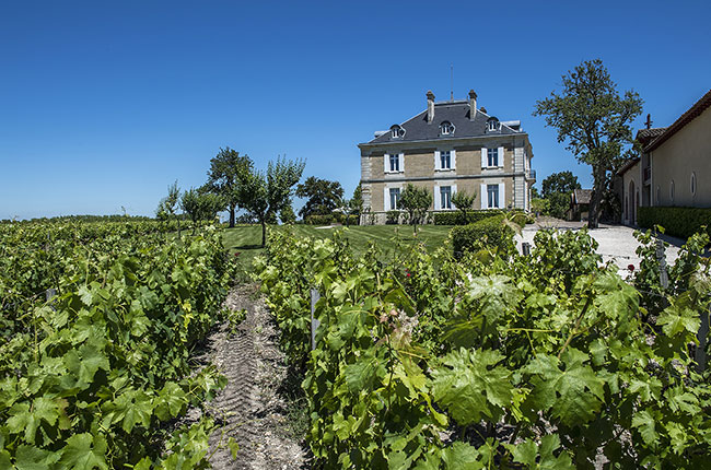 Haut-Bailly vines, decanter man of the year 2016
