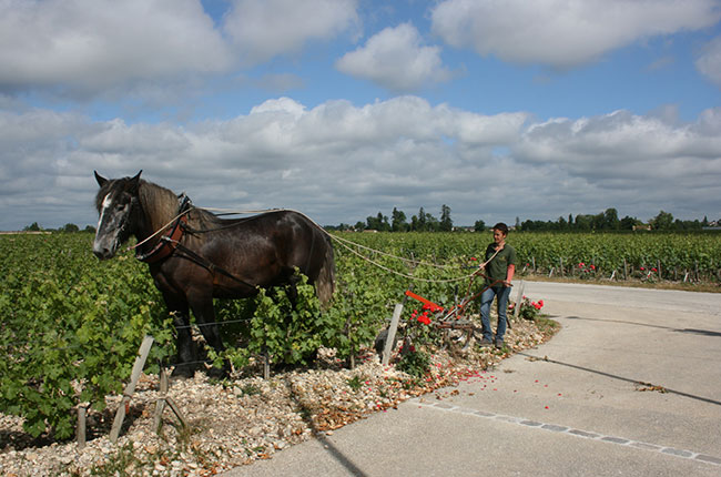 French terroir, Horse ploughing Latour