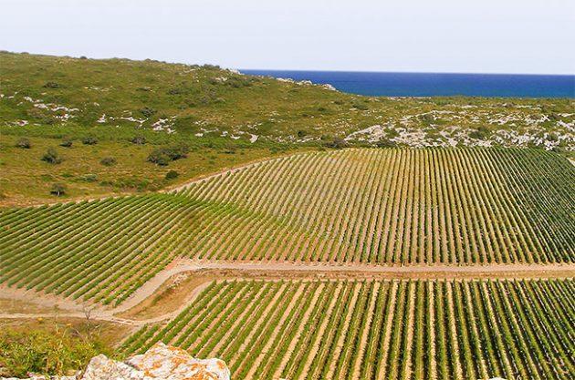 Languedoc vineyards near to the Mediterranean