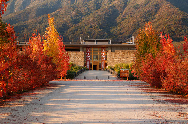 Montes Bodega - Best wineries to visit