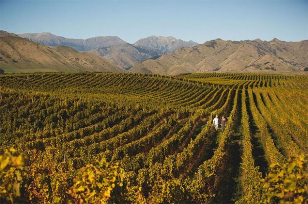 Churton vineyard and winery in New Zealand