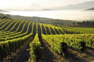 France Languedoc-Roussillon Blanquette de Limoux vineyards credit Partick Castagnas