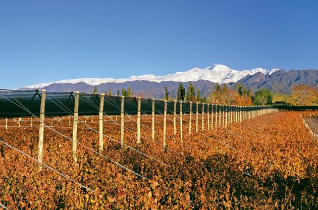Bodega-Terrazas-de-los-Andes-in-Argentina