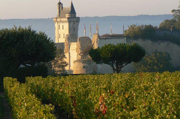 Loire reds vintage guide