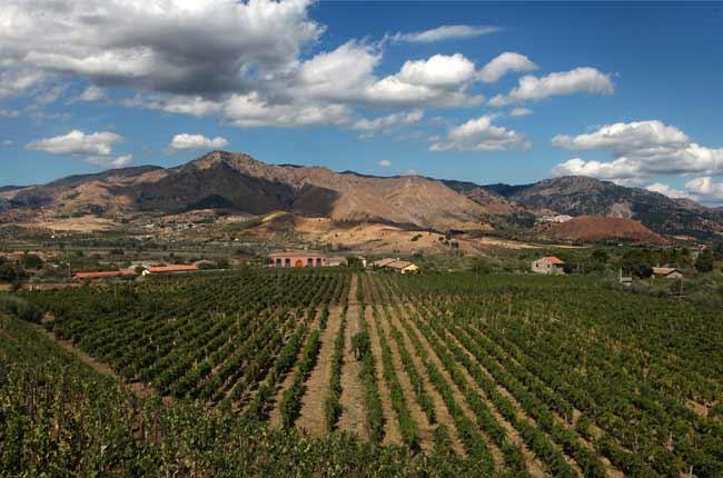 Top Volcanic Wines
