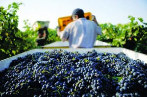 new california wine trends