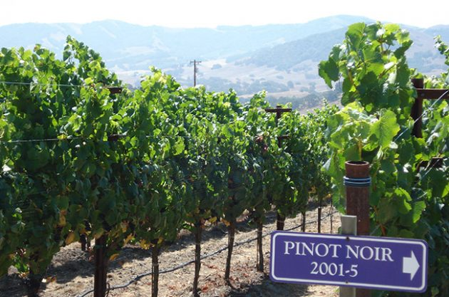 california wine road trip
