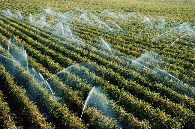 Vineyards in Mildura, Australia, are sprayed with water.