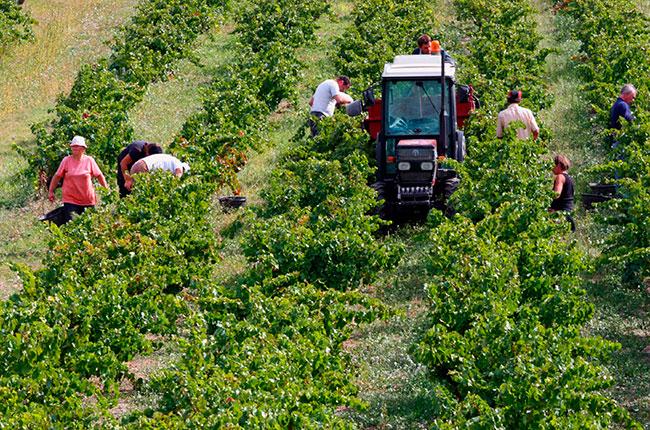 Southern Rhône 2012 vintage