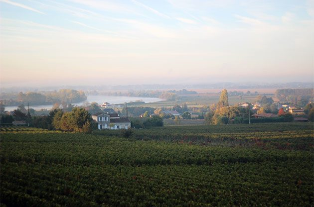 Château Gaby, bordeaux, invest into wine, Sure Holdings, fine wine investment, vineyard