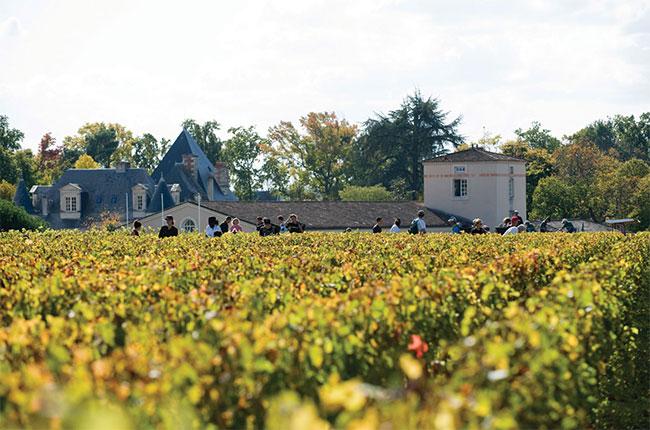 Château Haut-Brion, harvest