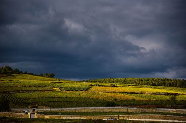 Burgundy 2016 harvest report: Who survived nature's wrath