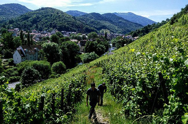terroir wine, rangen de thann, alsace