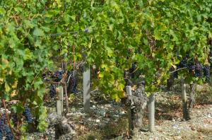 Bordeaux second wines