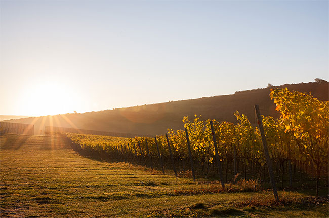 rathfinny vineyards, sussex wine