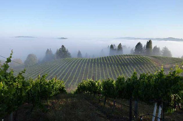 California wine balance