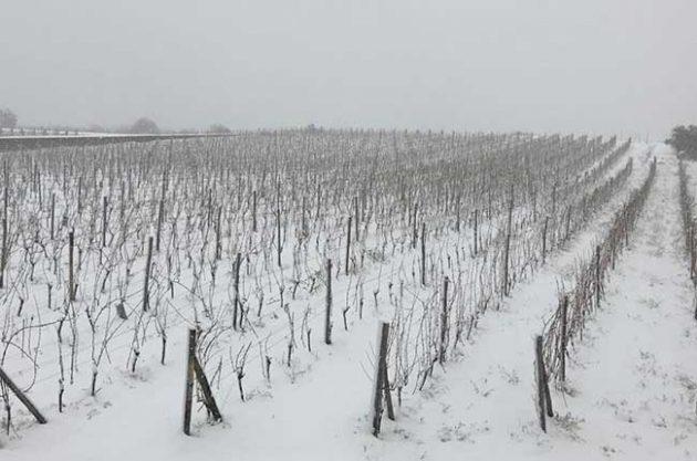 Snow vines