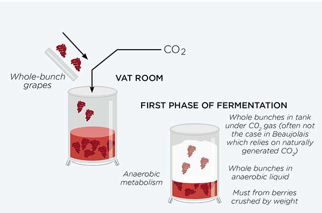 Whole bunch fermentation