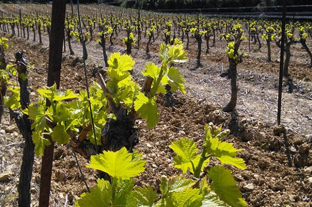 Pays d'oc wine, languedoc