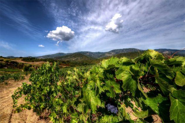 Wines in Corsica, abbatucci