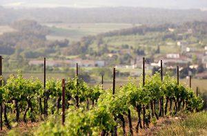 gaillac vineyards, france