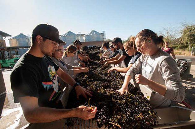 UC Davis sell wine