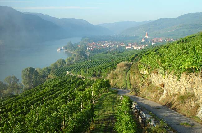 View from Austrian Gruner Veltliner vineyard Achleiten in Wachau