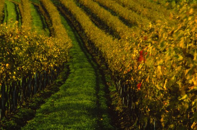 Austrian wine style guide