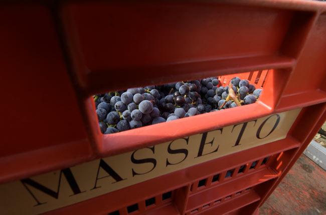 Masseto grapes.