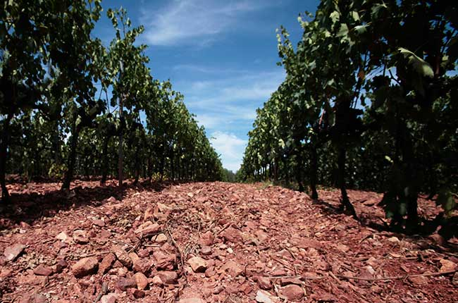 soil wine